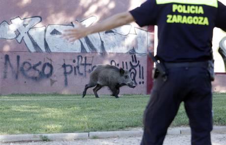 A la caza del jabalí... en Parque Goya de Zaragoza